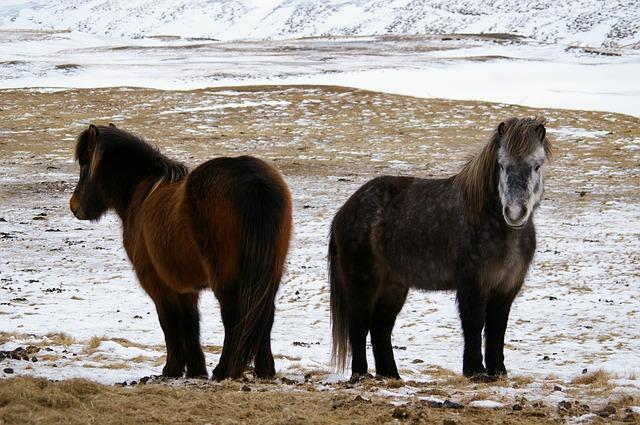 Visiter l'Islande en hiver, quand il y a de la neige