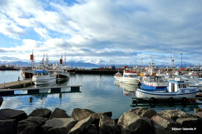 Husavik : musée de la baleine et port de pêche